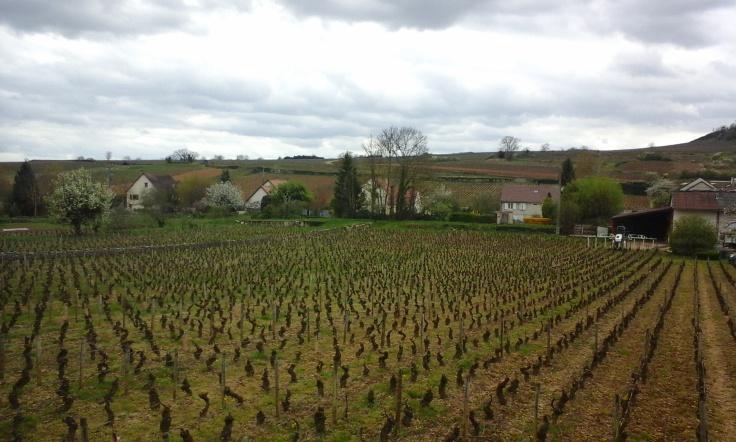 Vino de Borgoña